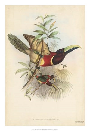 Framed Tropical Toucans III Print