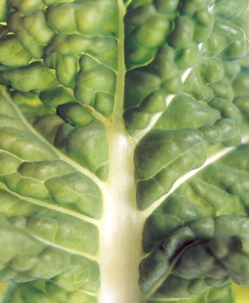 Framed Close up of bumpy vegetable leaf with white stalk Print