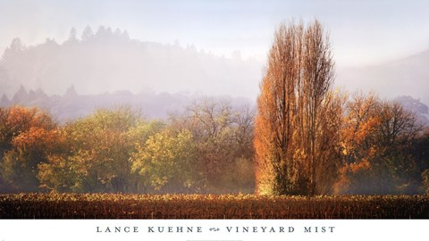 Framed Vineyard Mist Print