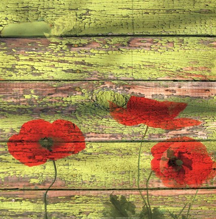 Framed Red Poppies 2 Print
