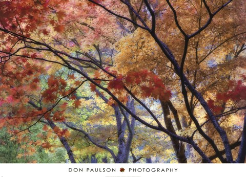 Framed Lithia Park Fall 3 Print
