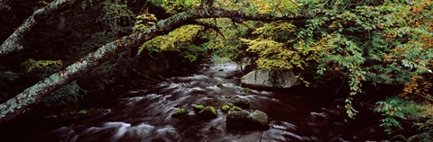 Framed Stream flowing through a forest, Adirondack Mountains, New York State, USA Print