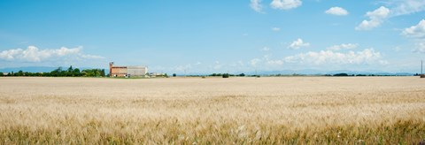 Framed Wheat field with grain elevator near D8, Plateau de Valensole, Alpes-de-Haute-Provence, Provence-Alpes-Cote d'Azur, France Print