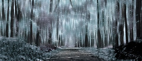 Enchanted Forest Black And White Fine Art Print By Panoramic Images At Fulcrumgallery Com