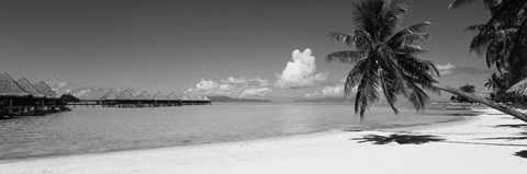 Framed Moana Beach (black and white), Bora Bora, Tahiti, French Polynesia Print