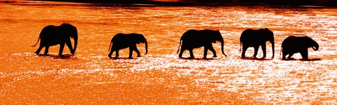 Framed Herd of African Elephants Crossing the Uaso Nyiro River, Kenya Print