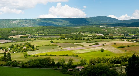 Framed High angle view of a field, Sault, Vaucluse, Provence-Alpes-Cote d'Azur, France Print