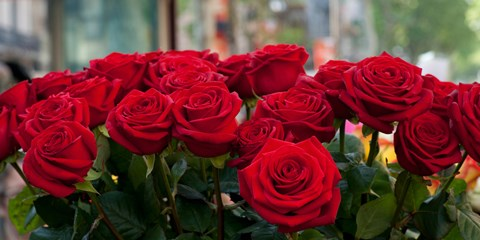 Framed Close-up of red roses in a bouquet during Sant Jordi Festival, Barcelona, Catalonia, Spain Print