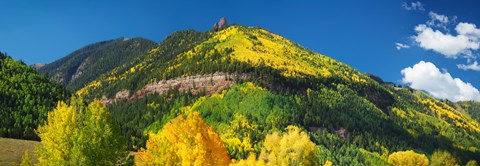 Framed Aspen trees on mountain, Needle Rock, Gold Hill, Uncompahgre National Forest, Telluride, Colorado, USA Print