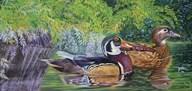 Bayou Wood Ducks  Fine Art Print