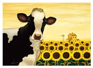 Sunflower Cow  Fine Art Print