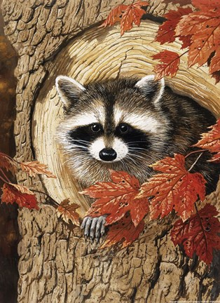 Raccoon Fine Art Print By William Vanderdasson At