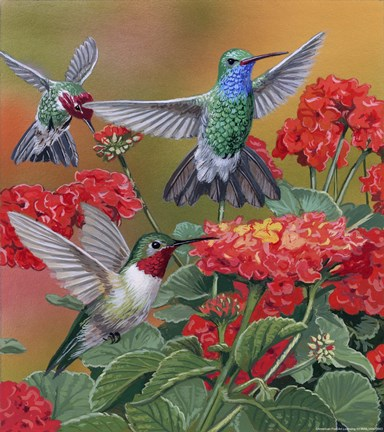 Hummingbirds Amp Flowers Fine Art Print By William
