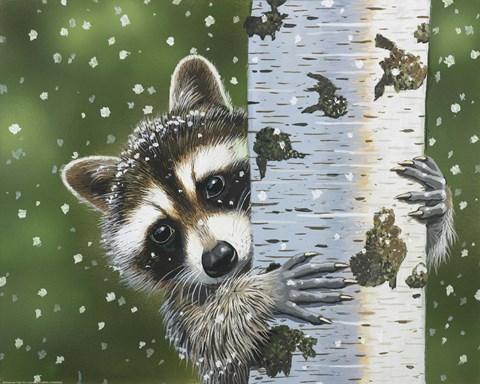 Peek A Boo Raccoon Fine Art Print By William Vanderdasson