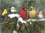 Backyard Birds On Snowy Branch  Fine Art Print