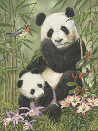 Panda Paradise Fine Art Print By William Vanderdasson At Fulcrumgallery Com