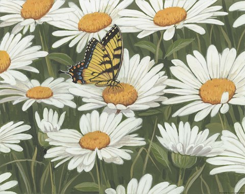 Framed Daisies And Butterfly Print