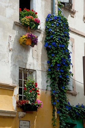 Framed Building with flower pots on each window, Rue Des Arenes, Arles, Bouches-Du-Rhone, Provence-Alpes-Cote d'Azur, France Print