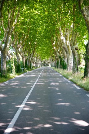 Framed Allee of trees, St.-Remy-De-Provence, Bouches-Du-Rhone, Provence-Alpes-Cote d'Azur, France Print
