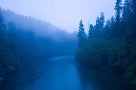 Framed River passing through a forest in the rainy morning, Jedediah Smith Redwoods State Park, Crescent City, California, USA Print