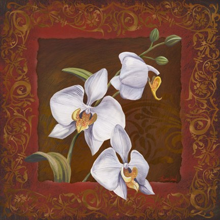 Framed Orchid Study I Print