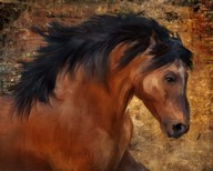 Wild Horse  Fine Art Print
