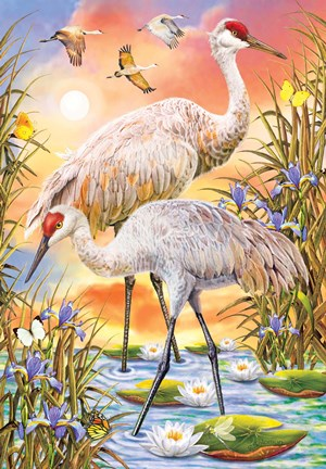 Sandhill Cranes Fine Art Print By Rosiland Solomon At