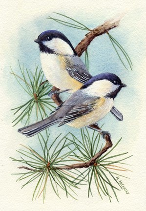 Chickadee Vignette Fine Art Print By Maureen Mccarthy At