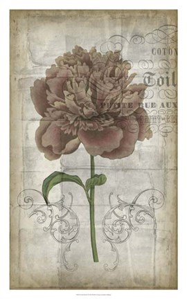 Framed French Floral IV Print