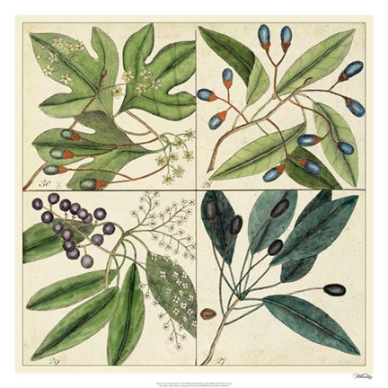 Framed Catesby Leaf Quadrant I Print