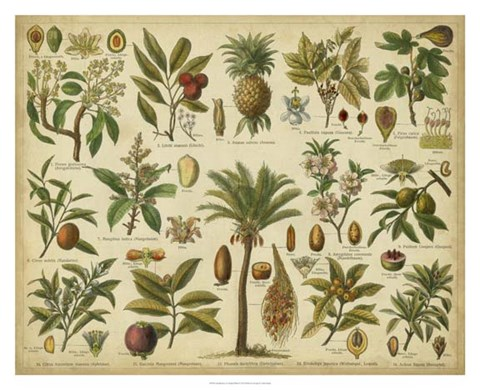 Framed Classification of Tropical Plants Print