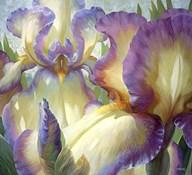 Port Townsend Garden  Fine Art Print