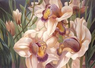 Our Serene Cymbidium  Fine Art Print