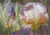 Perrenial Beauties  Fine Art Print