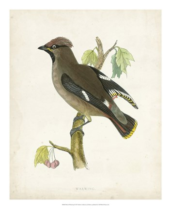 Framed Waxwing Print