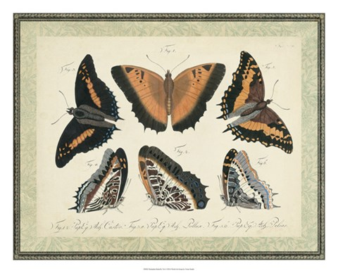 Framed Bookplate Butterflies Trio I Print