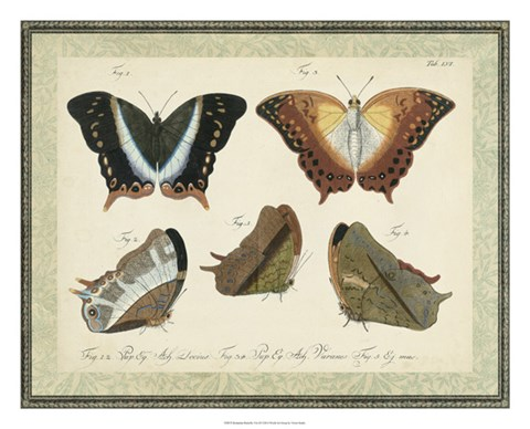 Framed Bookplate Butterflies Trio III Print