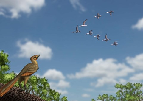Framed Archaeopteryx observing a flock of migrating pterosaurs Print