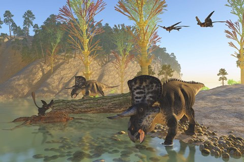 Framed Zuniceratops dinosaurs drinking water from a river Print