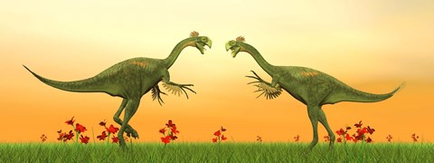 Framed Two Gigantoraptor dinosaurs fighting on green grass by sunset Print