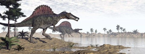 Framed Two Spinosaurus dinosaurs walking to the water in a desert landscape Print