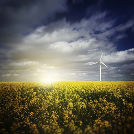 Framed Wind turbine in a canola field against cloudy sky at sunset, Denmark Print
