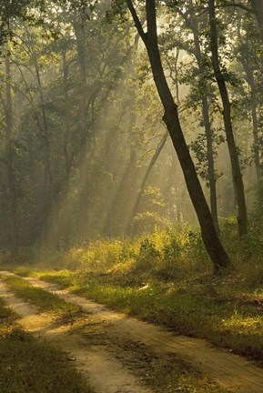 Framed Morning Light, Kanha National Park, India Print