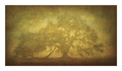 Framed St. Joe Plantation Oak in Fog 3 Print