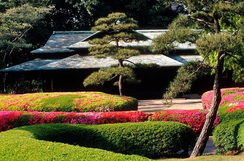 Framed Azaleas at the Imperial Palace East Gardens, Tokyo, Japan Print