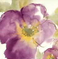 Radiant Poppy I  Fine Art Print