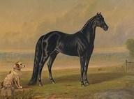 America's Renowned Stallions, c. 1876 I  Fine Art Print