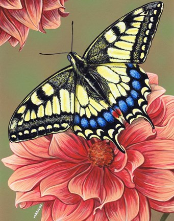 Framed Yellow Swallowtail Butterfly Print