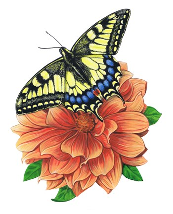 Framed Yellow Swallowtail Butterfly II Print