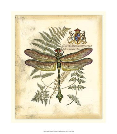 Framed Regal Dragonfly III Print